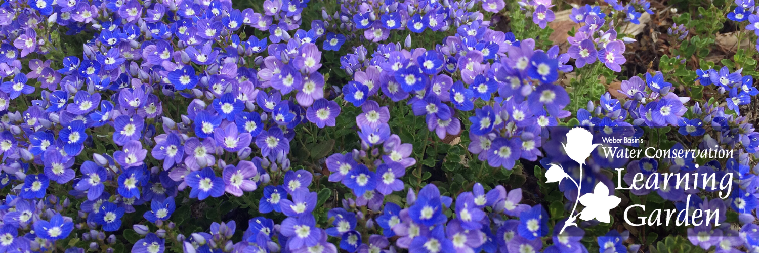 Image of Garden Flowers