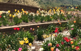 Image of a Flower Garden with path